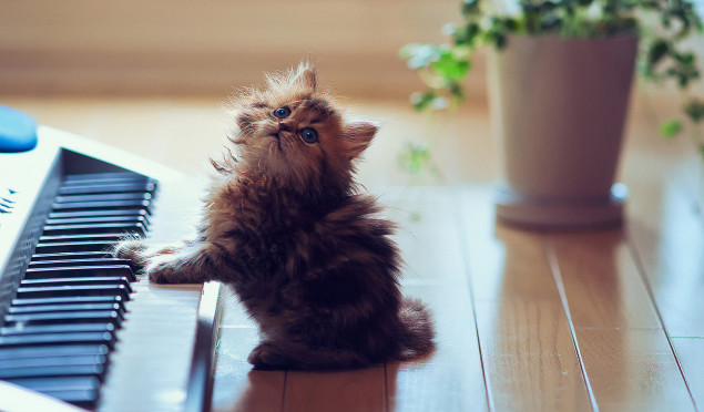 Scientists have developed music specifically for cats — this is what it sounds like