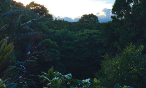 Surgeon to release album recorded in Hawaiian jungle on Editions Mego