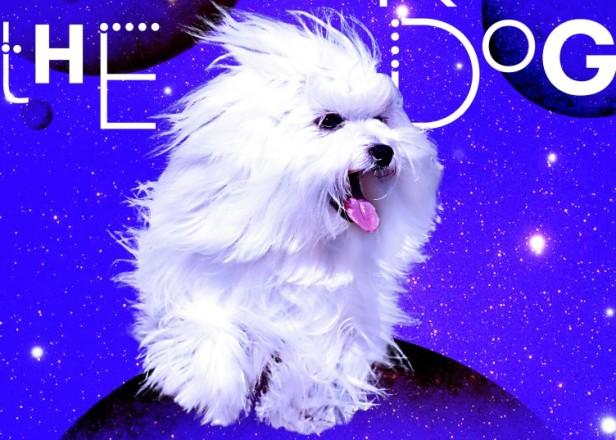 Basement Jaxx offshoot Geranimo & Mikey unveil dog-themed vogue anthem