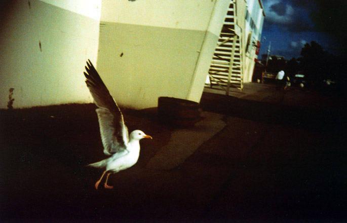 atp017Claire Griffiths -dancer2009