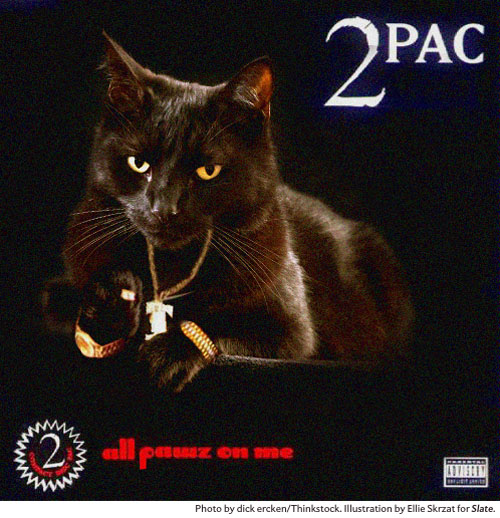 Your Favourite Hip Hop Album Covers Have Been Remade Featuring Cats