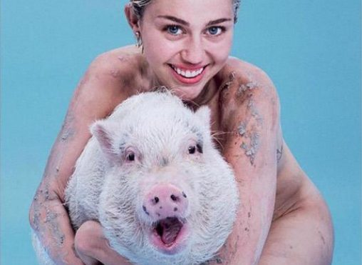 Miley Cyrus is naked and hugging a pig on the cover of PAPER magazine