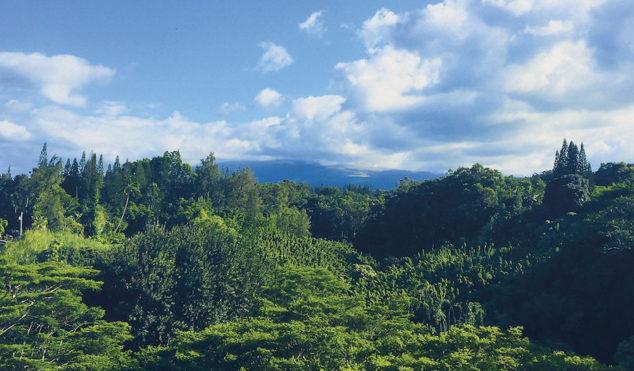 Surgeon preps second volume of Buchla recordings made in Hawaiian jungle