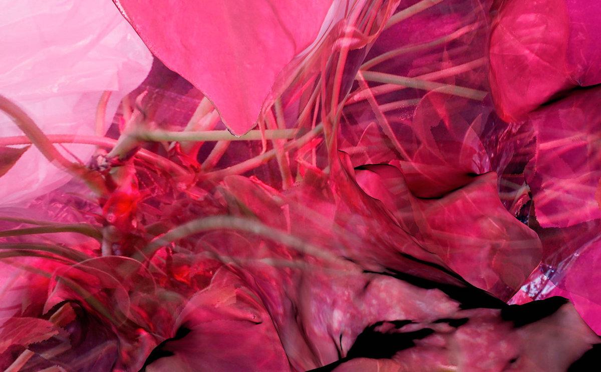 Soft tissue album art