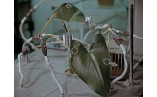 Robert Gerard Pietrusko & Courtney Stephens resurrect lost ecologies with The Room: Remastering Eden